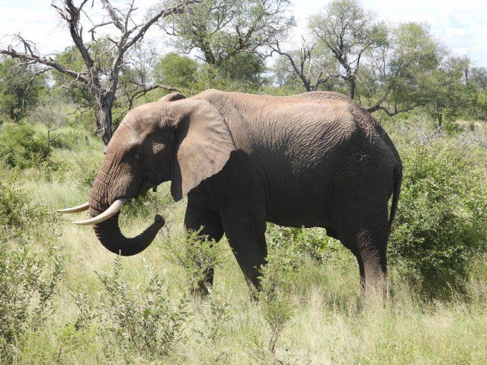 hard to find Elephants